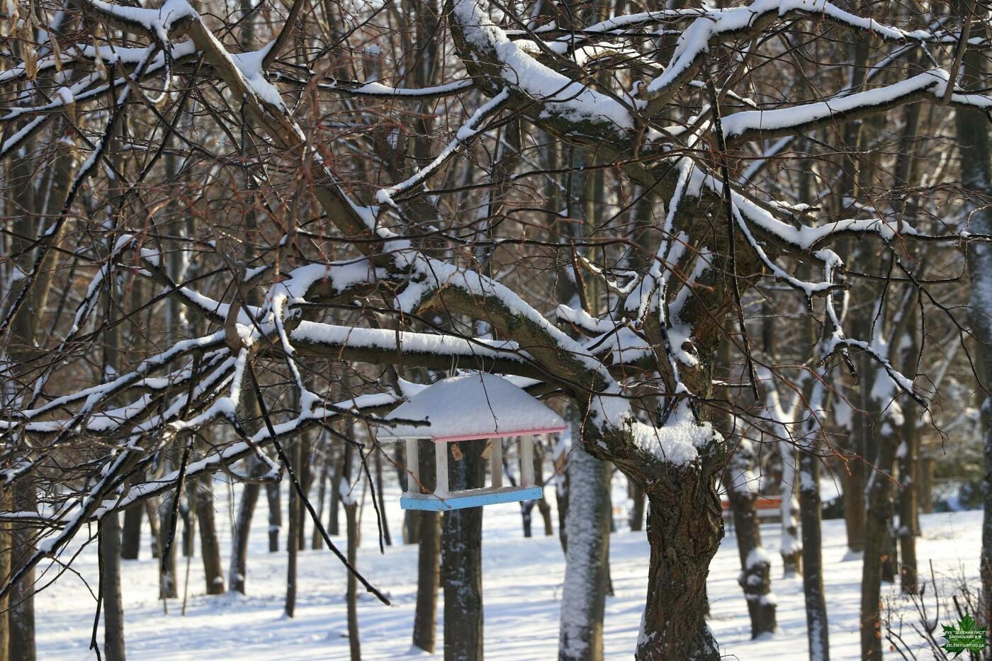 Одессит показал зиму в парке Победы, - ФОТО, фото-6, Фото: Владислав Балинский