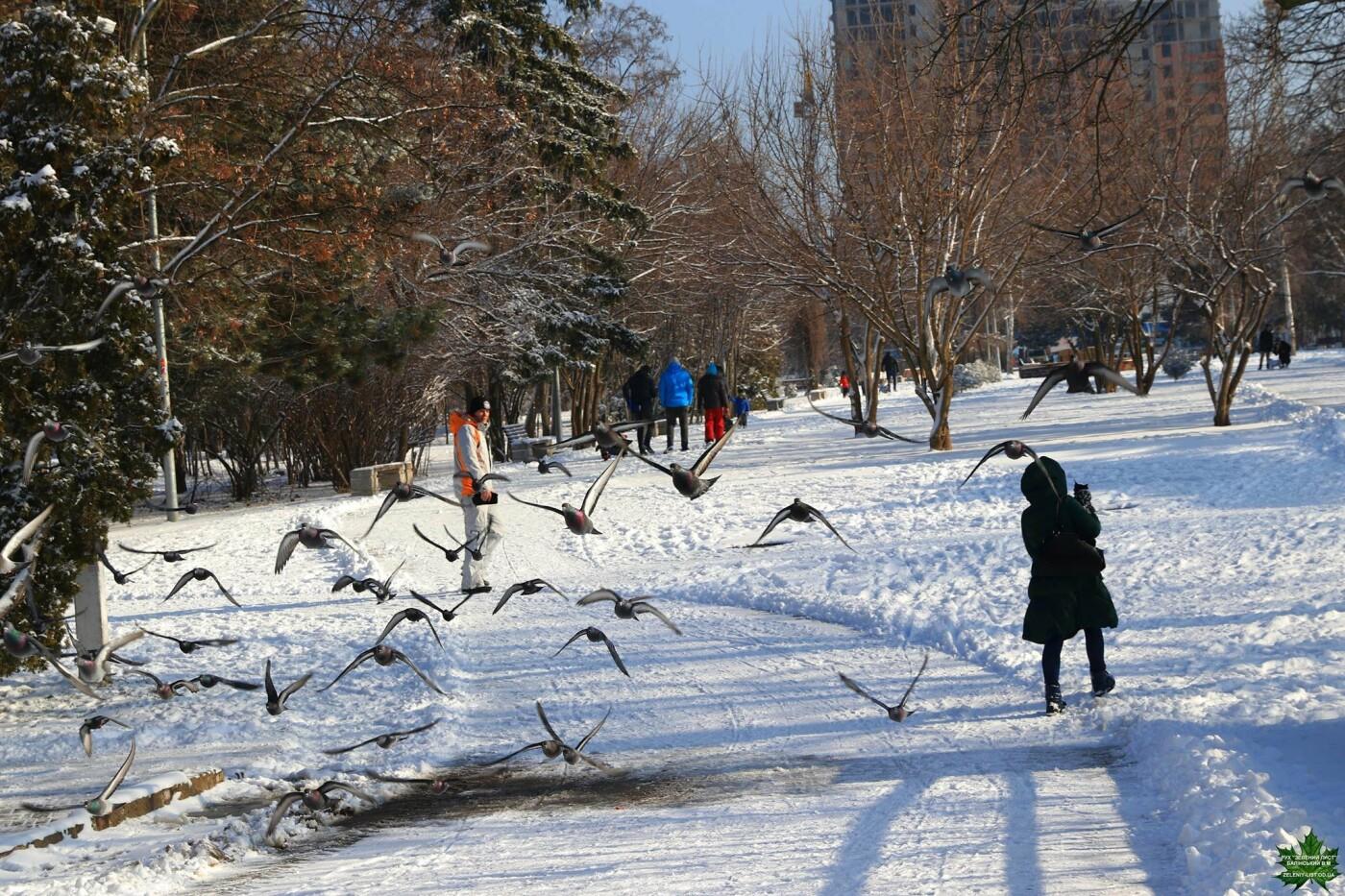 Одессит показал зиму в парке Победы, - ФОТО, фото-11, Фото: Владислав Балинский