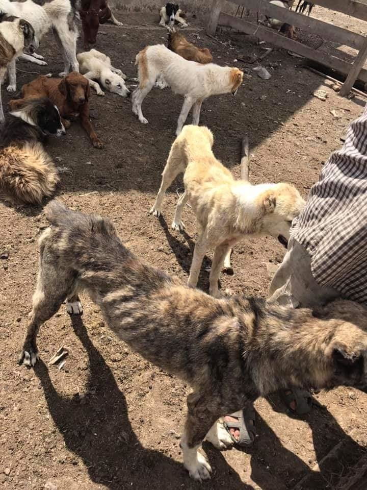 """В Одесской области обнаружили """"пыточную"""" для волкодавов - зоозащитники в шоке, - ФОТО, ВИДЕО, фото-1"""