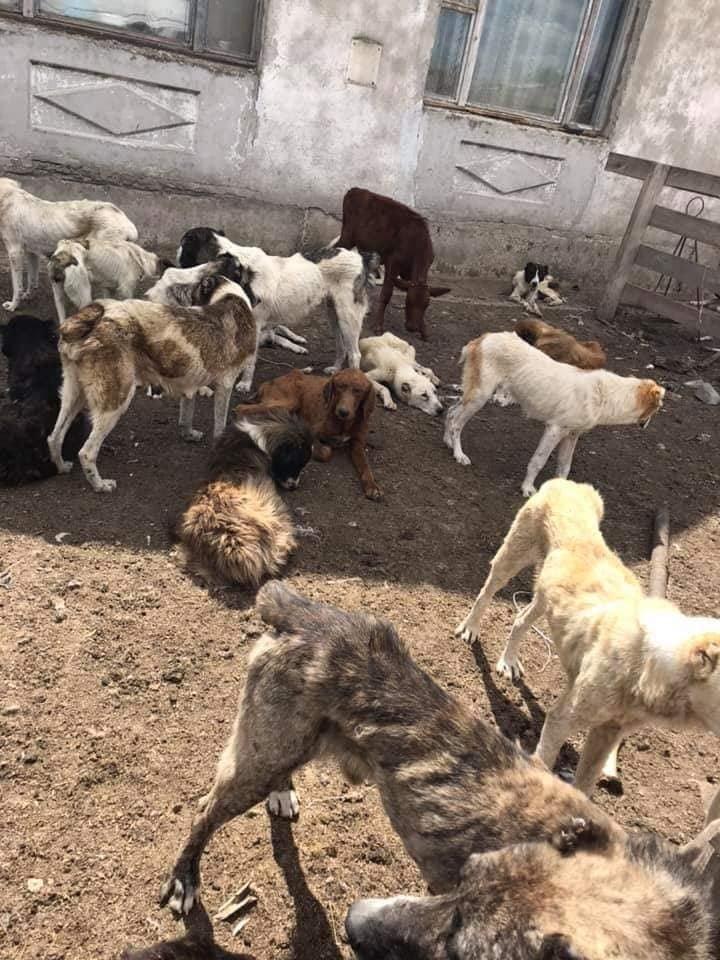 """В Одесской области обнаружили """"пыточную"""" для волкодавов - зоозащитники в шоке, - ФОТО, ВИДЕО, фото-2"""