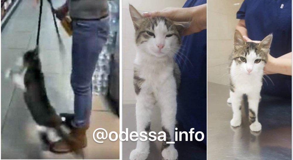 Одесситы спасли кота от жестокой хозяйки, - ФОТО, фото-1