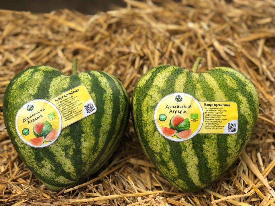 Арбузы с любовью: в Одесской области выращивают необычную ягоду, - ФОТО, фото-1
