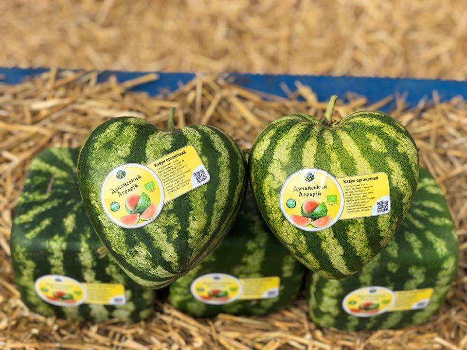 Арбузы с любовью: в Одесской области выращивают необычную ягоду, - ФОТО, фото-4
