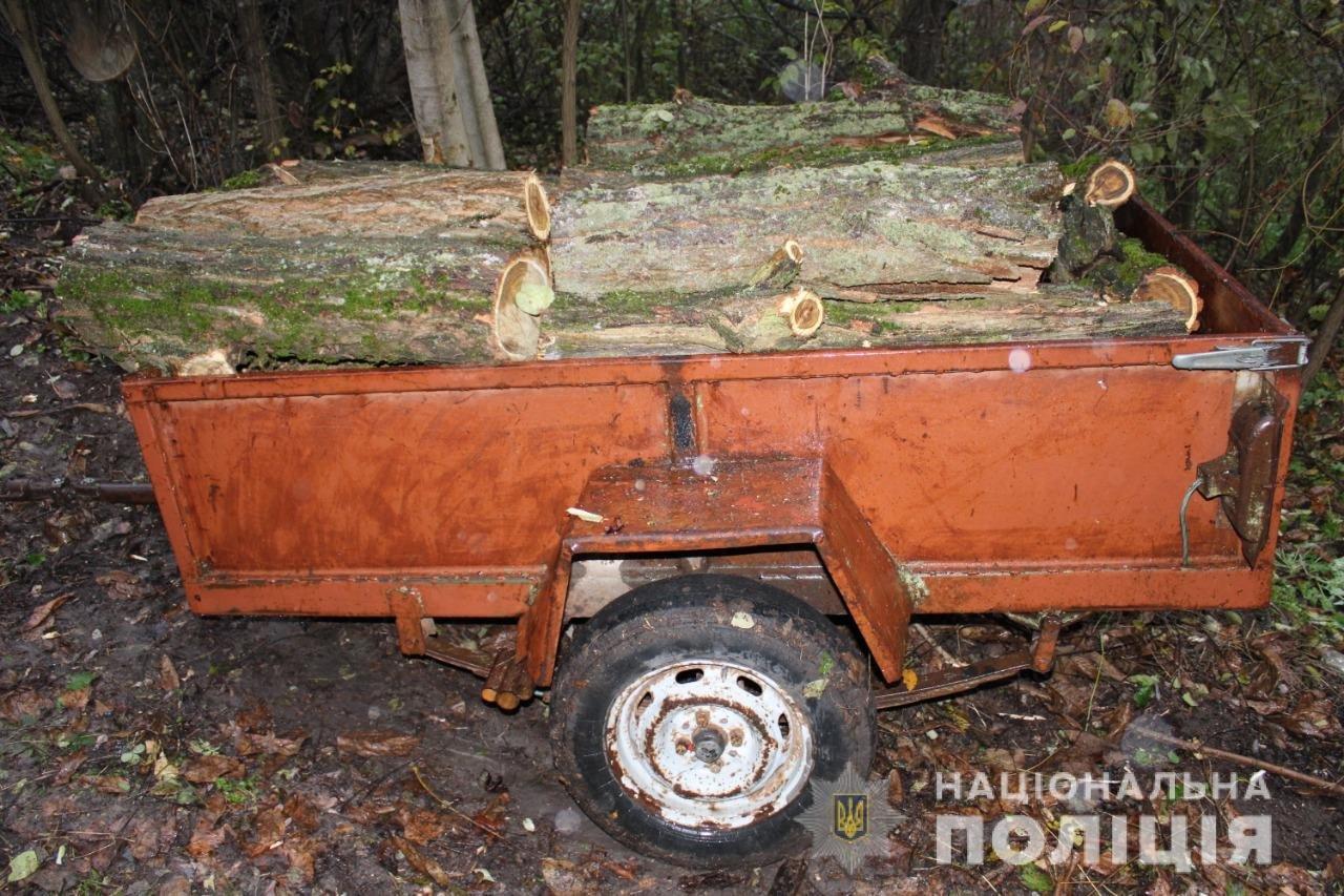 Незаконная вырубка леса: в Одесской области задержали черных лесорубов, - ФОТО, фото-1