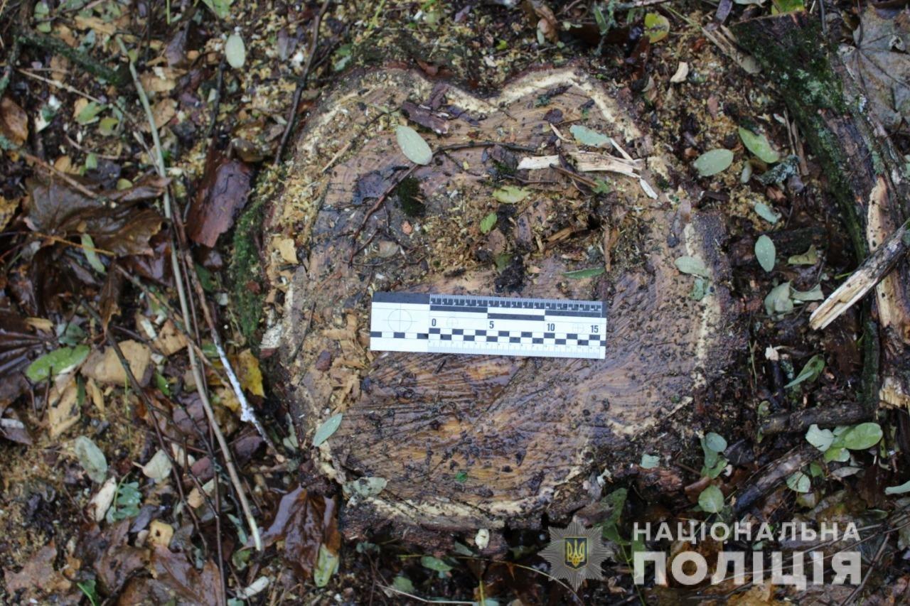 Незаконная вырубка леса: в Одесской области задержали черных лесорубов, - ФОТО, фото-3