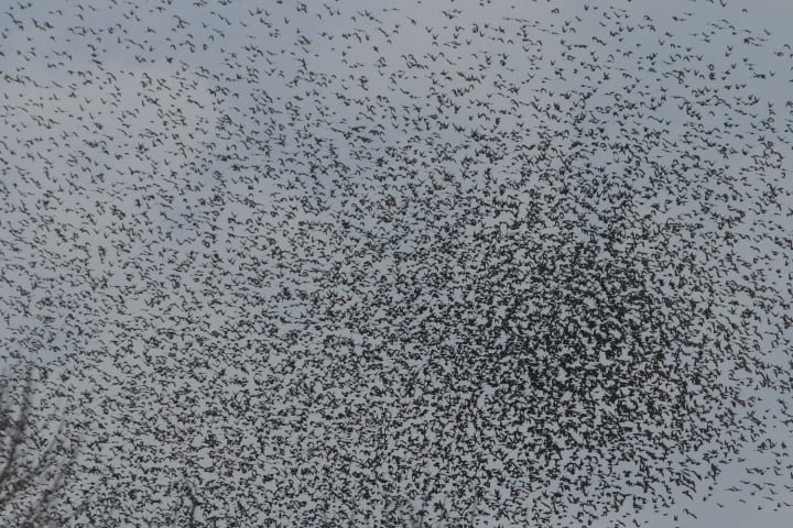 Пеликаны передумали зимовать в Африке и вернулись в Одесскую область, - ФОТО, фото-2