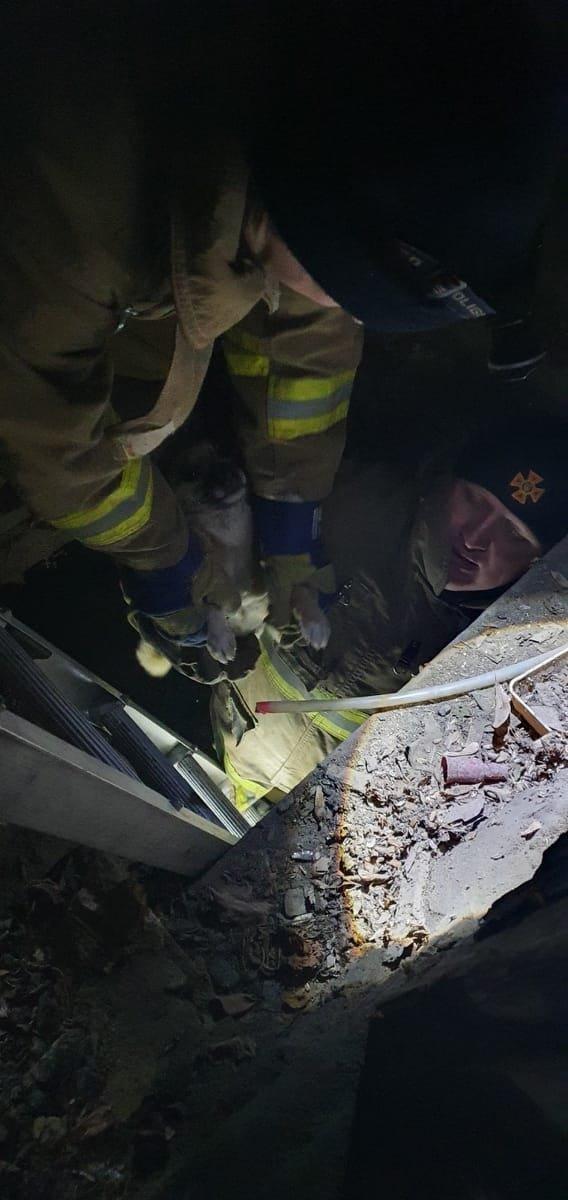 В Одесской области из подвала спасли щенков, - ФОТО, фото-11