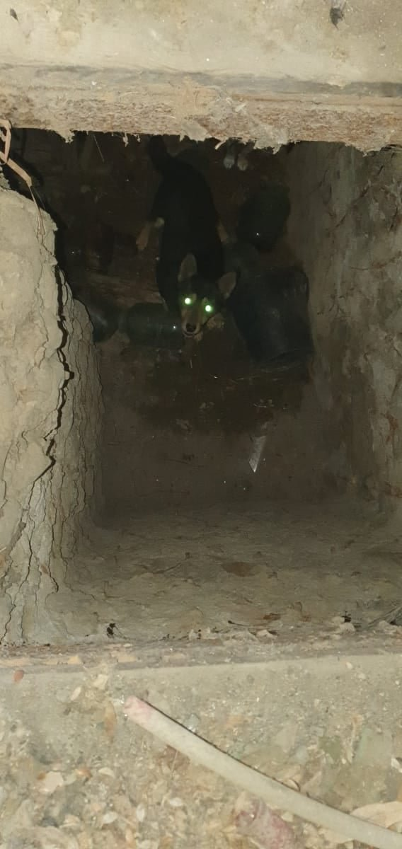 В Одесской области из подвала спасли щенков, - ФОТО, фото-22