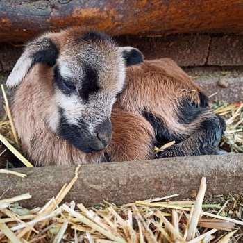 В Одесском зоопарке первое пополнение в 2021 году, - ФОТО2