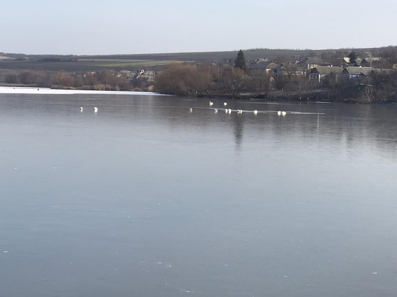 Спасатели в Одесской области освободили 16 лебедей от ледяного плена, - ФОТО, фото-2