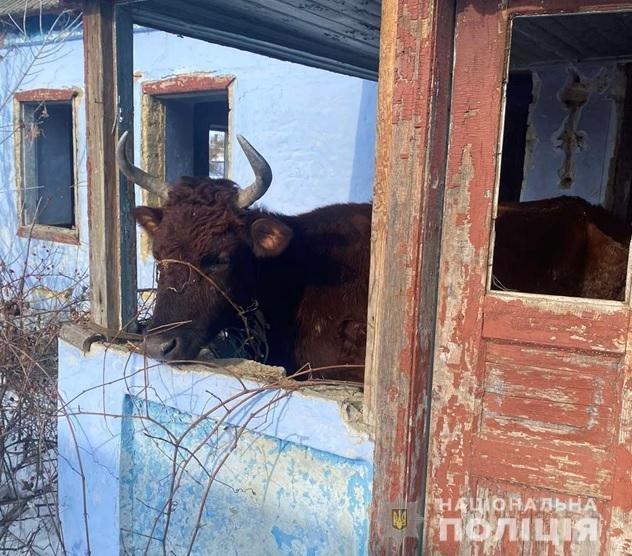 Полиция забрала коров у хозяина, который морил их голодом и холодом в Одесской области, - ФОТО, фото-1