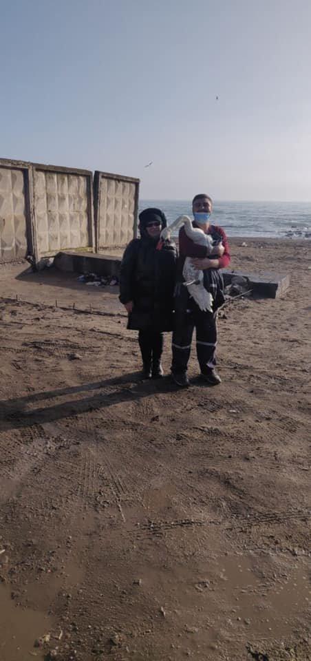 В Одессе от голода спасли лебедя, - ФОТО2
