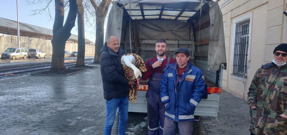 В Одессе от голода спасли лебедя, - ФОТО3