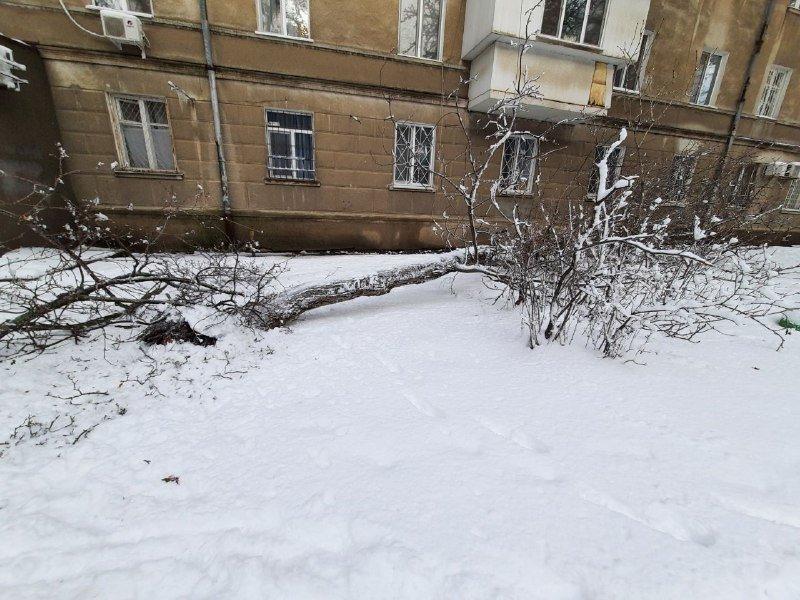 Коммунальщиков не видно: В Приморском районе Одессы лежат десятки деревьев, - ФОТОРЕПОРТАЖ, фото-15