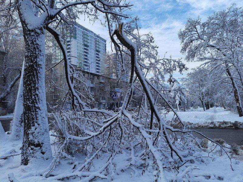 Коммунальщиков не видно: В Приморском районе Одессы лежат десятки деревьев, - ФОТОРЕПОРТАЖ, фото-29