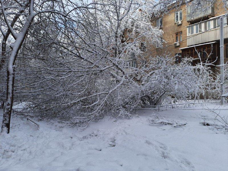 Коммунальщиков не видно: В Приморском районе Одессы лежат десятки деревьев, - ФОТОРЕПОРТАЖ, фото-16