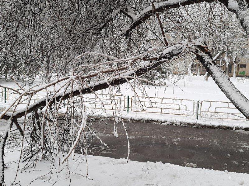 Коммунальщиков не видно: В Приморском районе Одессы лежат десятки деревьев, - ФОТОРЕПОРТАЖ, фото-17