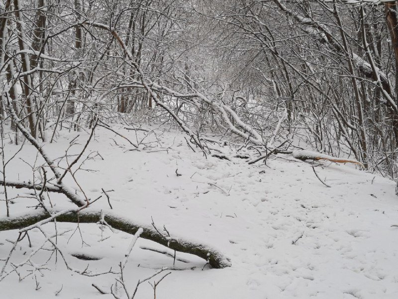 Коммунальщиков не видно: В Приморском районе Одессы лежат десятки деревьев, - ФОТОРЕПОРТАЖ, фото-26