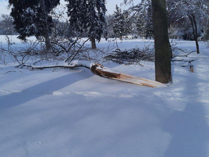 Коммунальщиков не видно: В Приморском районе Одессы лежат десятки деревьев, - ФОТОРЕПОРТАЖ, фото-32