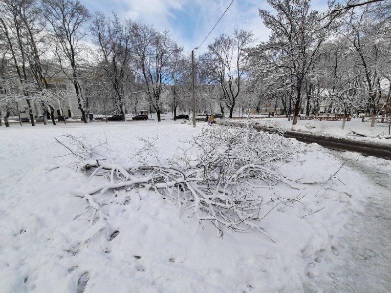 Коммунальщиков не видно: В Приморском районе Одессы лежат десятки деревьев, - ФОТОРЕПОРТАЖ, фото-33
