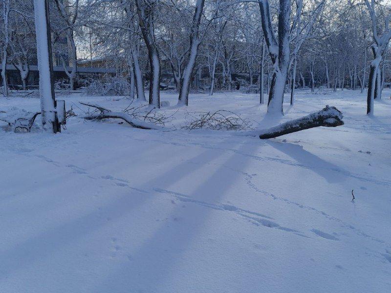 Коммунальщиков не видно: В Приморском районе Одессы лежат десятки деревьев, - ФОТОРЕПОРТАЖ, фото-36
