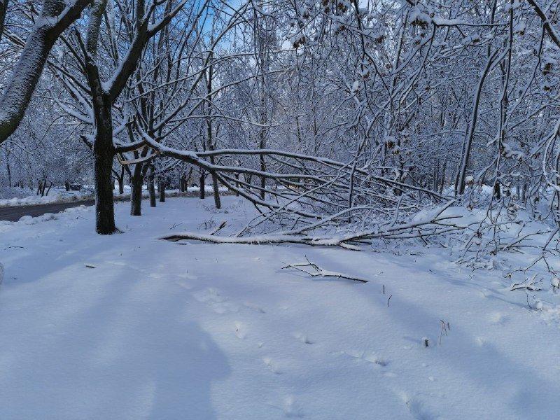 Коммунальщиков не видно: В Приморском районе Одессы лежат десятки деревьев, - ФОТОРЕПОРТАЖ, фото-30