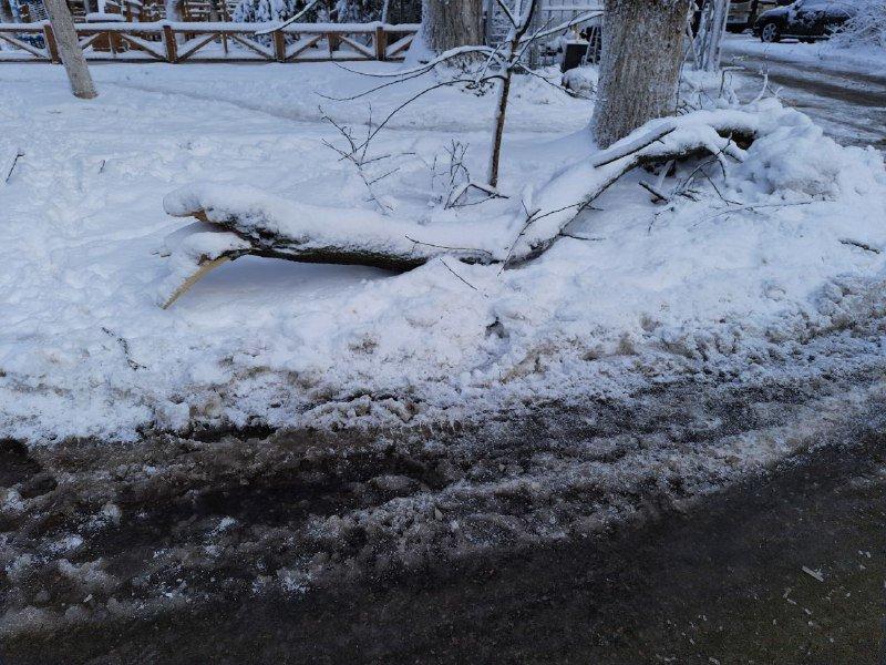 Коммунальщиков не видно: В Приморском районе Одессы лежат десятки деревьев, - ФОТОРЕПОРТАЖ, фото-25