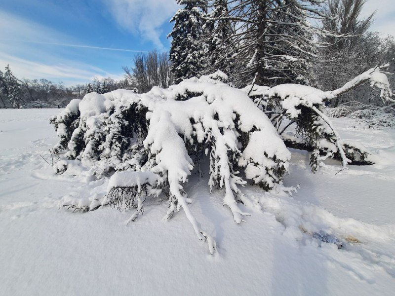 Коммунальщиков не видно: В Приморском районе Одессы лежат десятки деревьев, - ФОТОРЕПОРТАЖ, фото-37