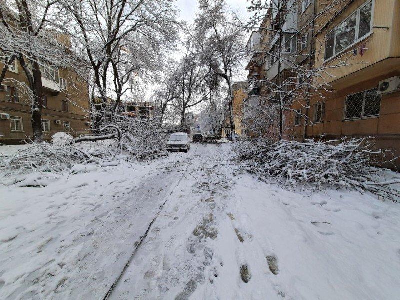 Коммунальщиков не видно: В Приморском районе Одессы лежат десятки деревьев, - ФОТОРЕПОРТАЖ, фото-12