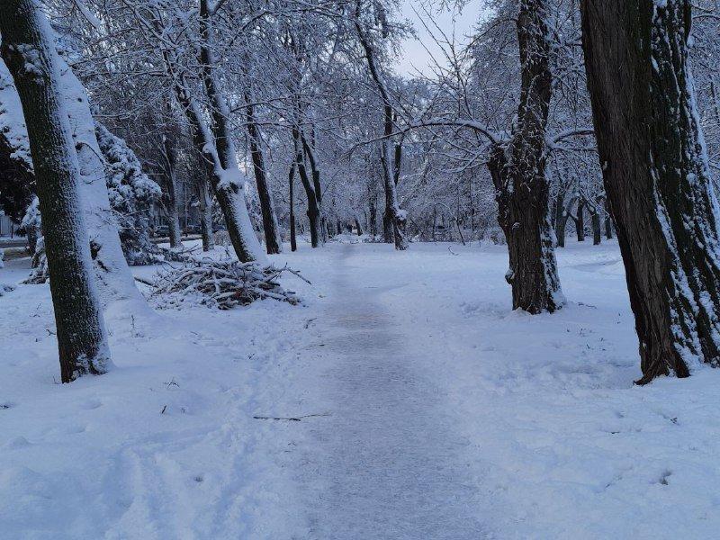 Коммунальщиков не видно: В Приморском районе Одессы лежат десятки деревьев, - ФОТОРЕПОРТАЖ, фото-28