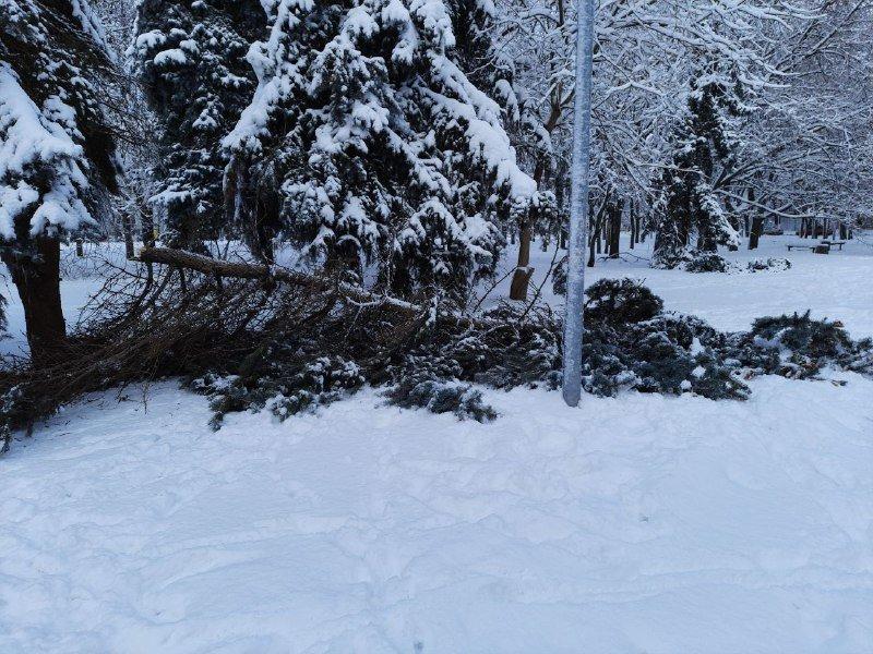 Коммунальщиков не видно: В Приморском районе Одессы лежат десятки деревьев, - ФОТОРЕПОРТАЖ, фото-31