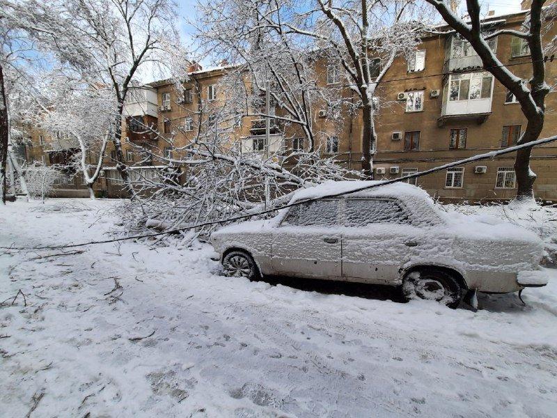 Коммунальщиков не видно: В Приморском районе Одессы лежат десятки деревьев, - ФОТОРЕПОРТАЖ, фото-13
