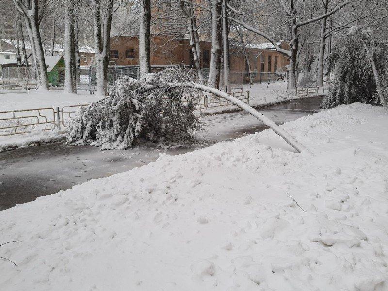 Коммунальщиков не видно: В Приморском районе Одессы лежат десятки деревьев, - ФОТОРЕПОРТАЖ, фото-18