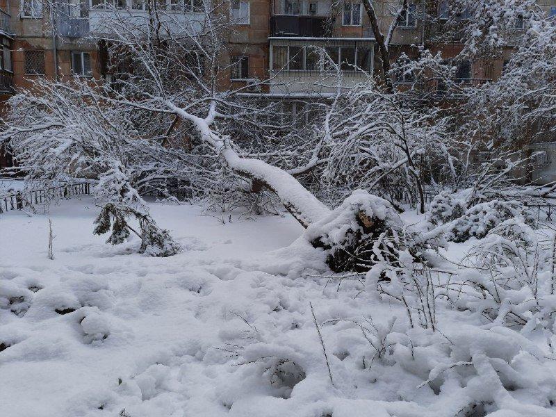 Коммунальщиков не видно: В Приморском районе Одессы лежат десятки деревьев, - ФОТОРЕПОРТАЖ, фото-14