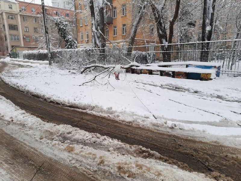 Коммунальщиков не видно: В Приморском районе Одессы лежат десятки деревьев, - ФОТОРЕПОРТАЖ, фото-21