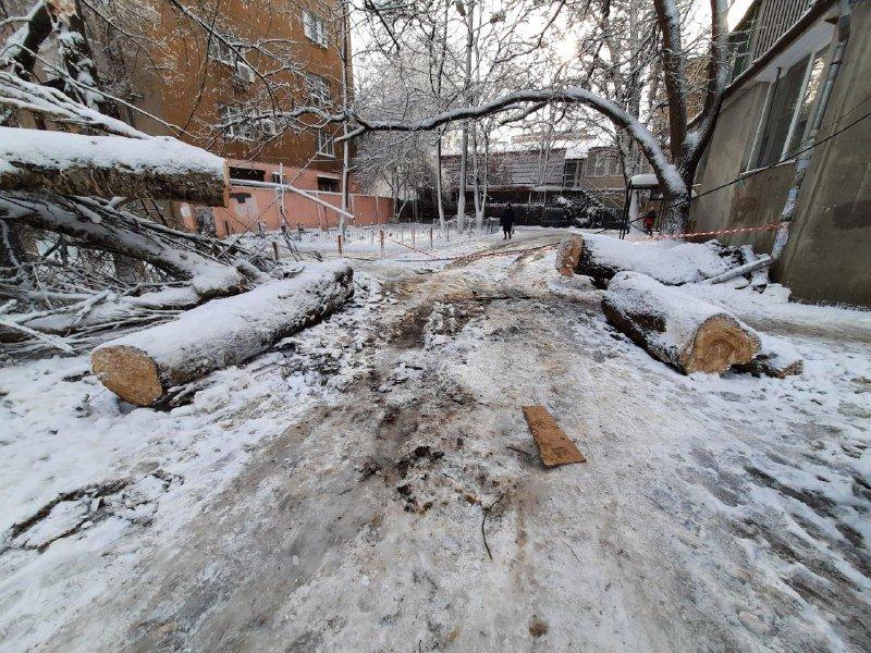 Коммунальщиков не видно: В Приморском районе Одессы лежат десятки деревьев, - ФОТОРЕПОРТАЖ, фото-22