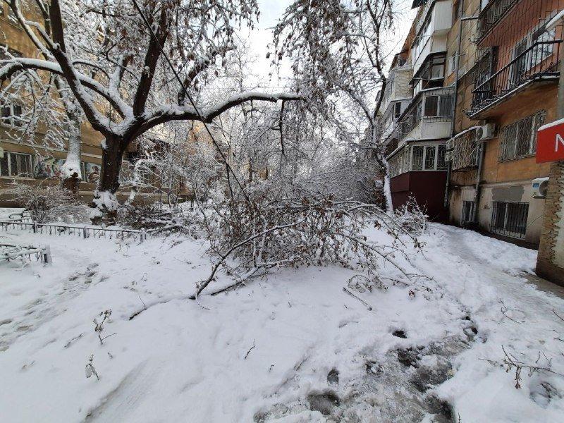 Коммунальщиков не видно: В Приморском районе Одессы лежат десятки деревьев, - ФОТОРЕПОРТАЖ, фото-11