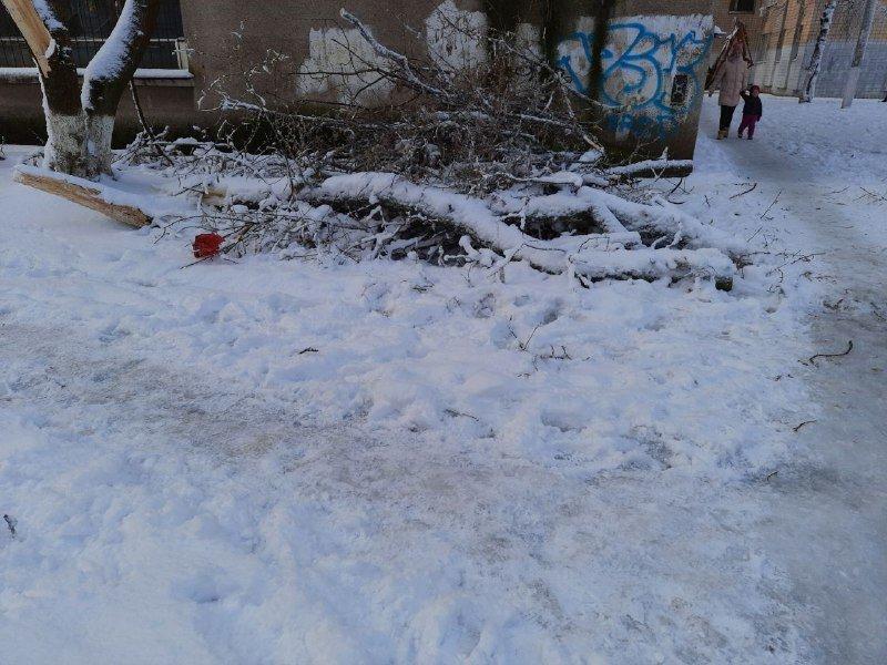 Коммунальщиков не видно: В Приморском районе Одессы лежат десятки деревьев, - ФОТОРЕПОРТАЖ, фото-23