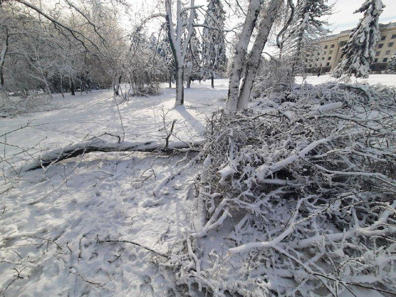 Коммунальщиков не видно: В Приморском районе Одессы лежат десятки деревьев, - ФОТОРЕПОРТАЖ, фото-35