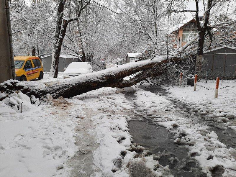 Коммунальщиков не видно: В Приморском районе Одессы лежат десятки деревьев, - ФОТОРЕПОРТАЖ, фото-24