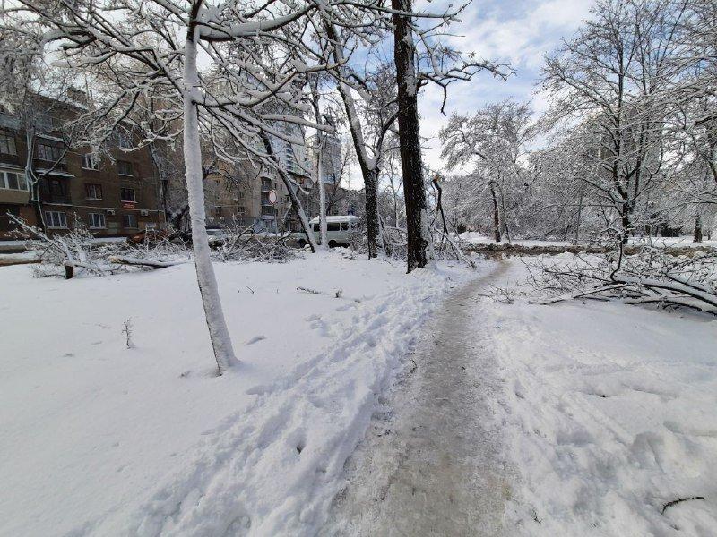 Коммунальщиков не видно: В Приморском районе Одессы лежат десятки деревьев, - ФОТОРЕПОРТАЖ, фото-27