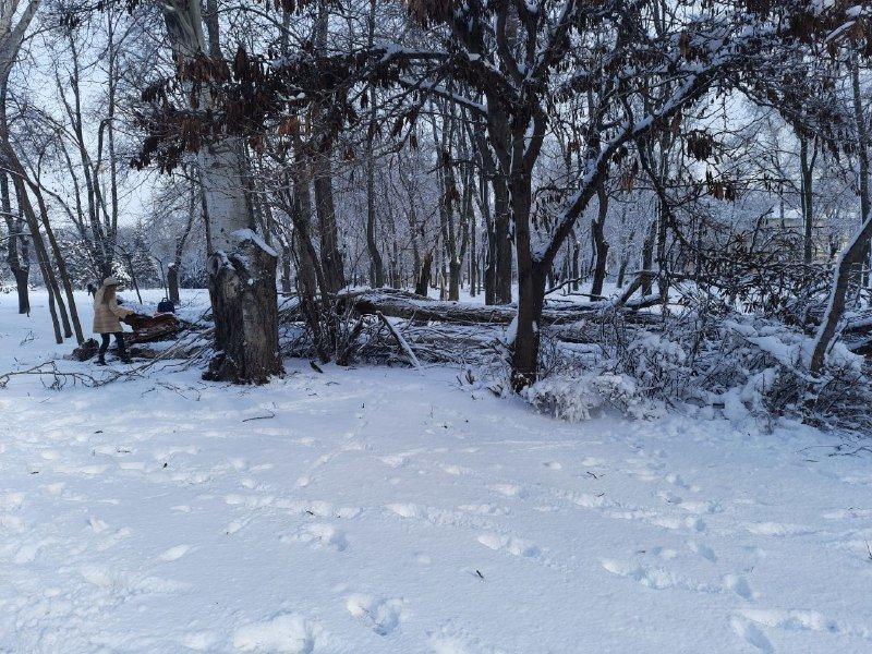 Коммунальщиков не видно: В Приморском районе Одессы лежат десятки деревьев, - ФОТОРЕПОРТАЖ, фото-34