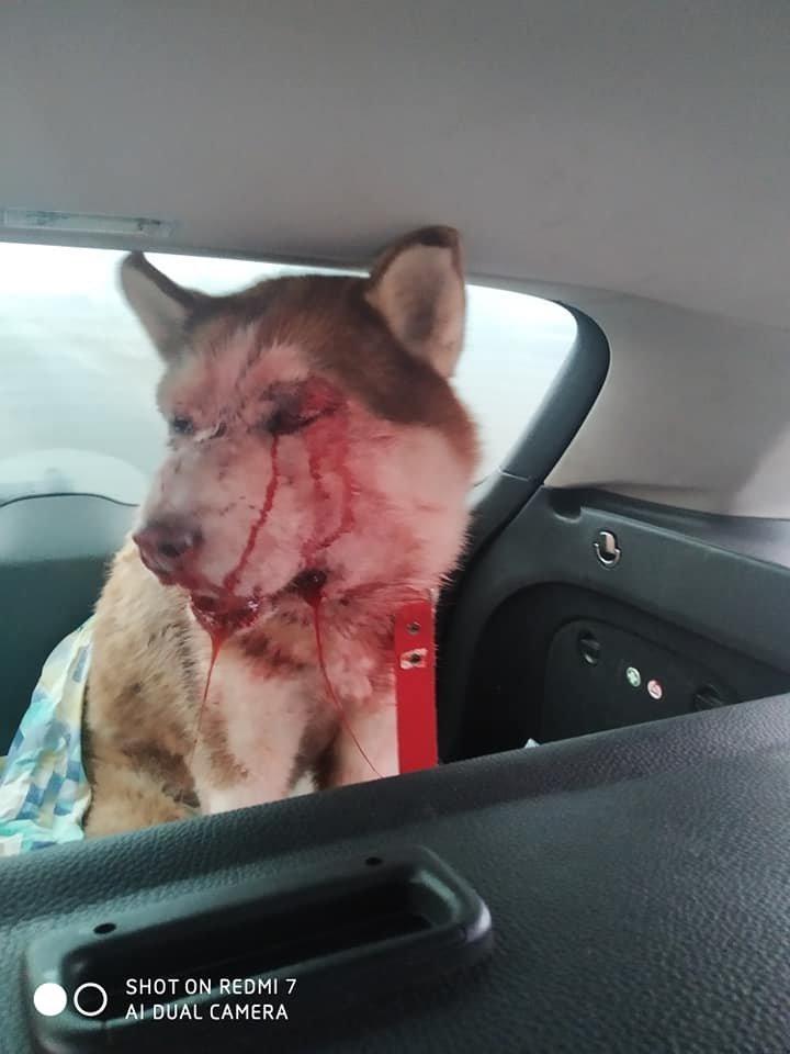 В Одесской области мужчина жестоко избил собаку, - ФОТО, фото-4