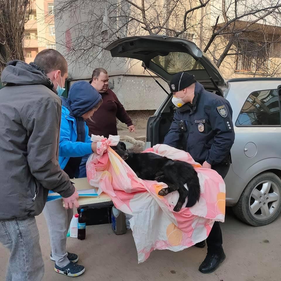 В Одессе с балкона выбросили собаку, - ФОТО, ОБНОВЛЕНО, фото-2