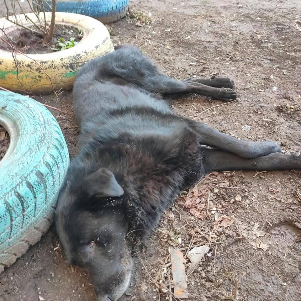 В Одессе с балкона выбросили собаку, - ФОТО, ОБНОВЛЕНО, фото-1