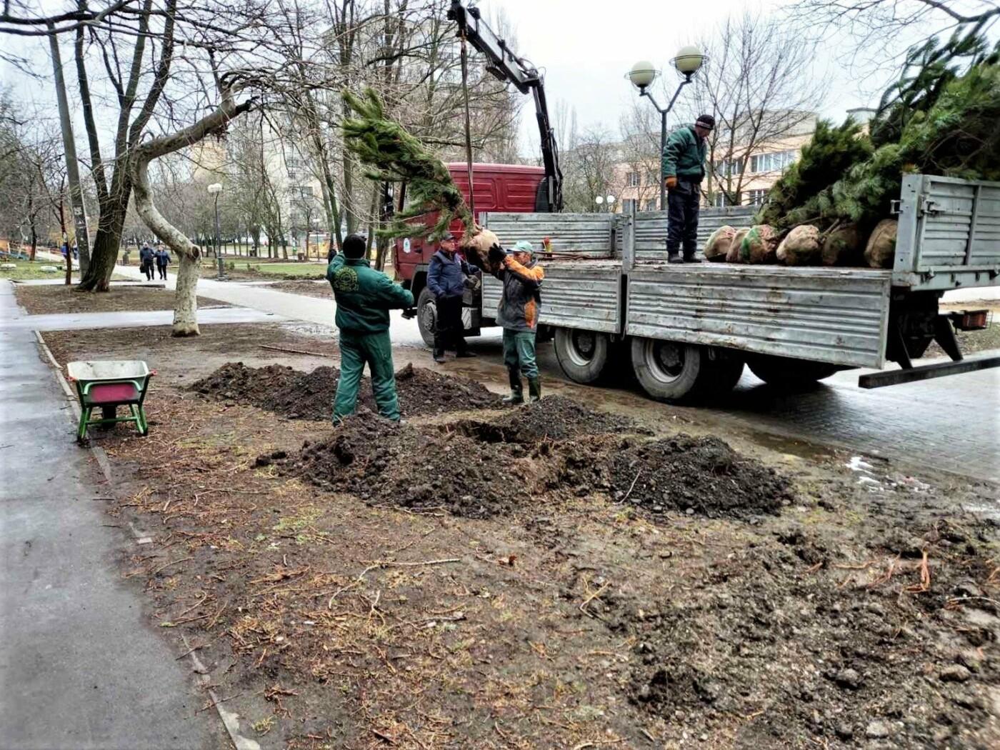 На Крымском бульваре в Одессе начали высаживать молодые сосны, - ФОТО, фото-2
