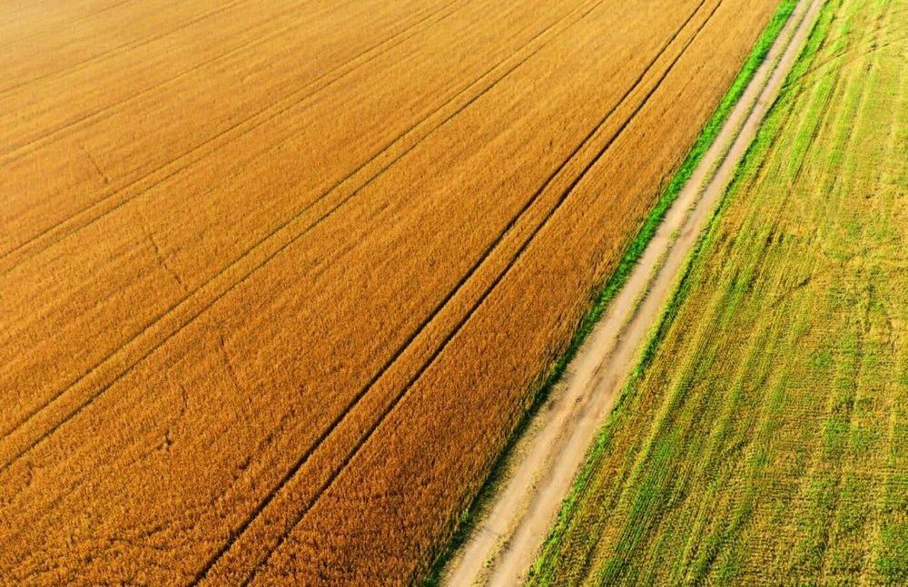 Земельна реформа на Одещині: експерти відповіли на найрозповсюдженіші питання місцевих жителів , фото-1