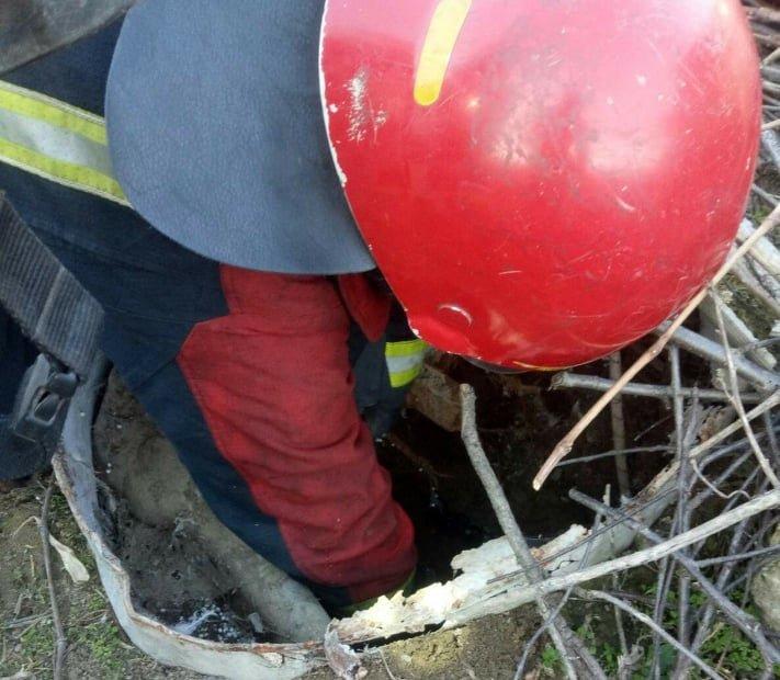В Одесской области спасатели доставали собаку из выгребной ямы, - ФОТО, фото-1