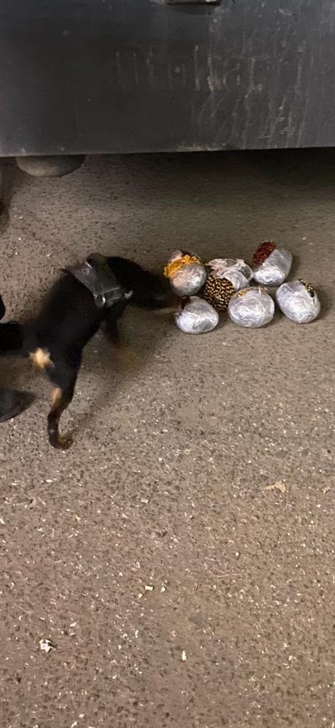 Под Одессой служебный пёс помог обнаружить 5 кг янтарных украшений, - ФОТО, фото-2