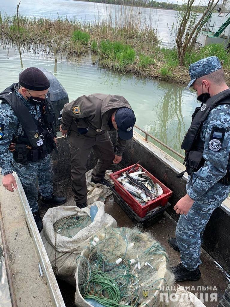 В Одесской области задержали браконьеров, которые ловили краснокнижных осетров, фото-1